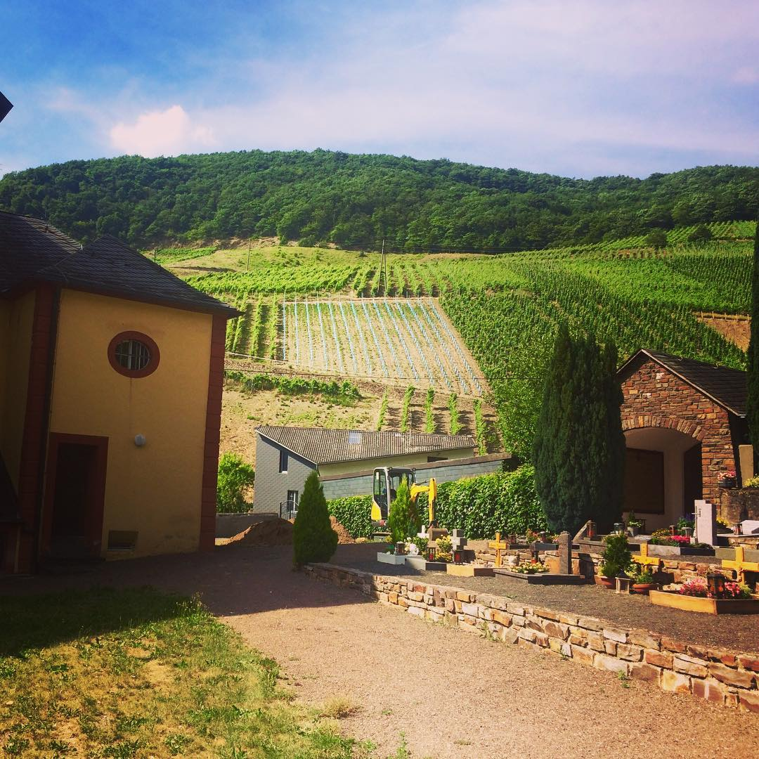 The steep hill vineyards in Senheim